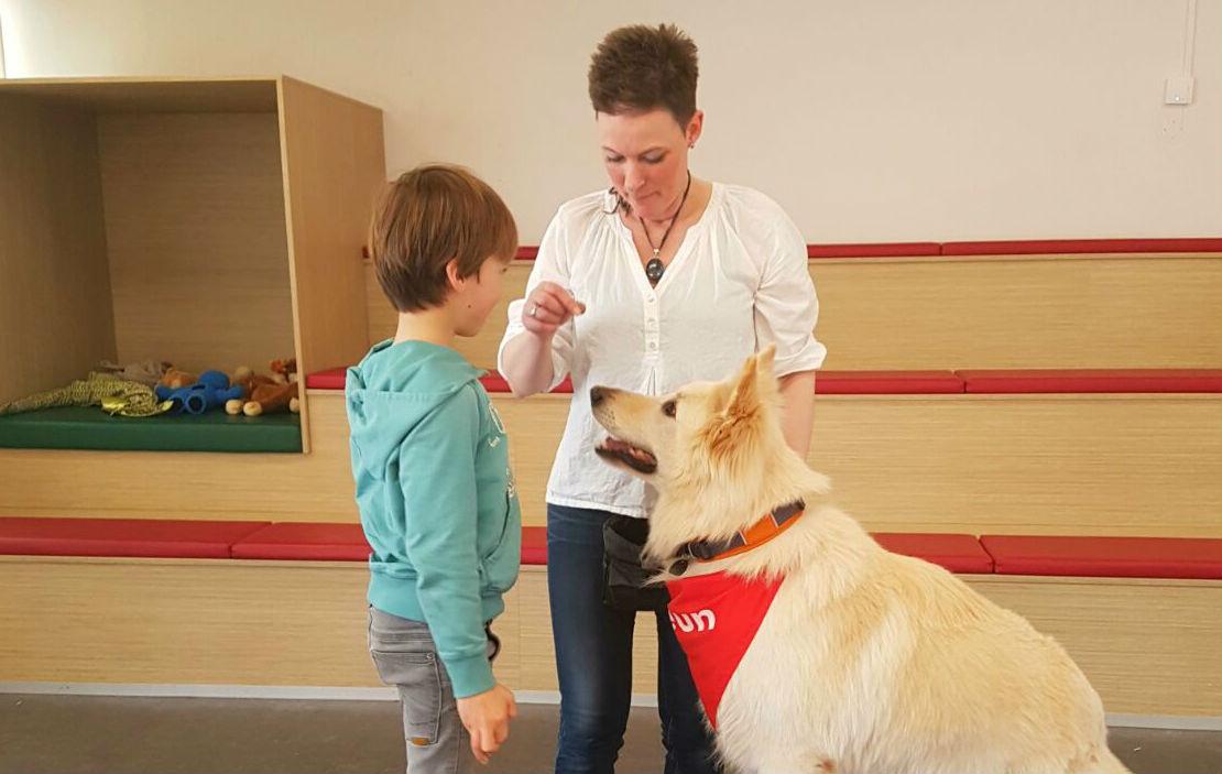 zwitserse herder darf hulphond