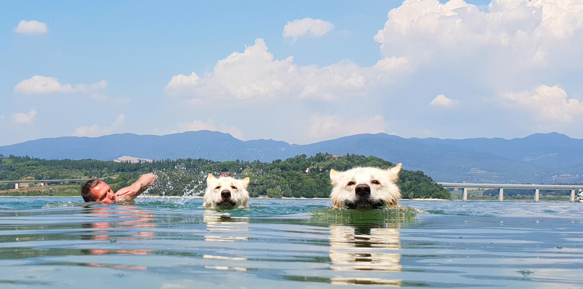 zwemmen zwitserse herders darf