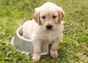 6 tips voor het voeren van je puppy