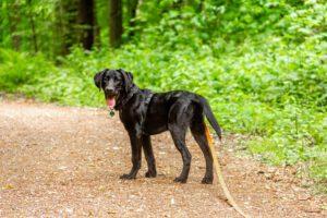 Wandelroutes met de hond