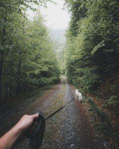 Wandelroutes met de hond II
