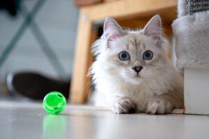 Benodigdheden voor de kat