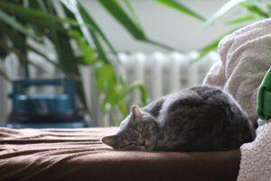 Hoeveel slaap heeft mijn kat nodig?